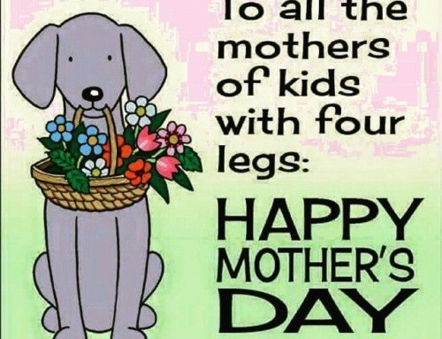 Happy Mother's Day from Pet Presents!